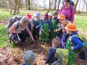 Examining fern unfurling