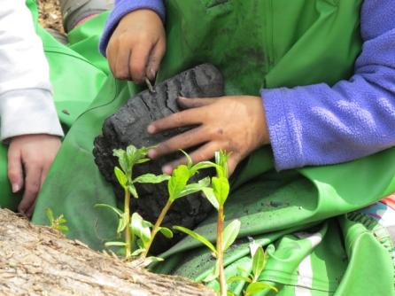 Exploring charcoal