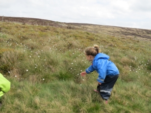 Touching the cotton grass